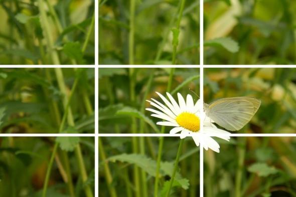 SNSでも注目!スマートフォンでキレイな写真を撮るコツ 【花・植物編】 7