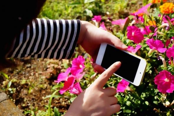 SNSでも注目!スマートフォンでキレイな写真を撮るコツ 【花・植物編】 2