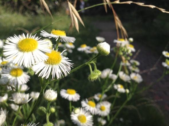 SNSでも注目!スマートフォンでキレイな写真を撮るコツ 【花・植物編】 12