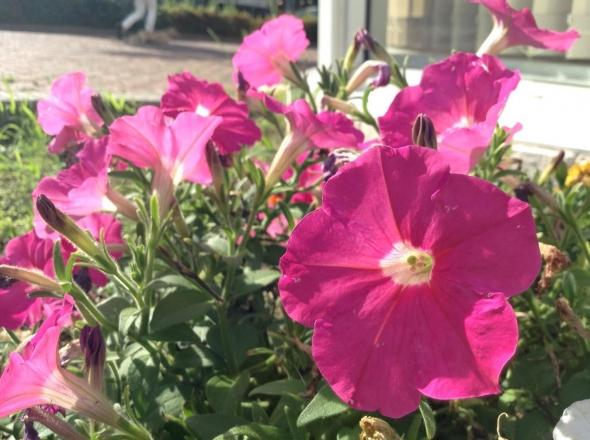 SNSでも注目!スマートフォンでキレイな写真を撮るコツ 【花・植物編】 4