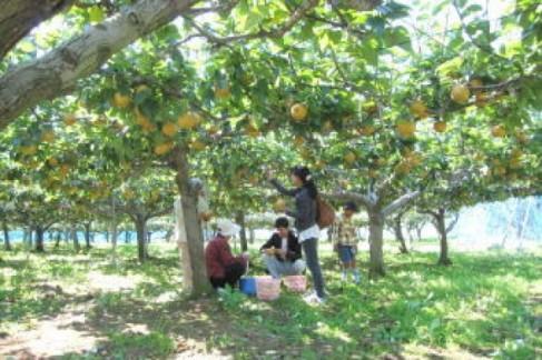 fruitmura02