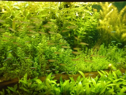aquarium-fish-24