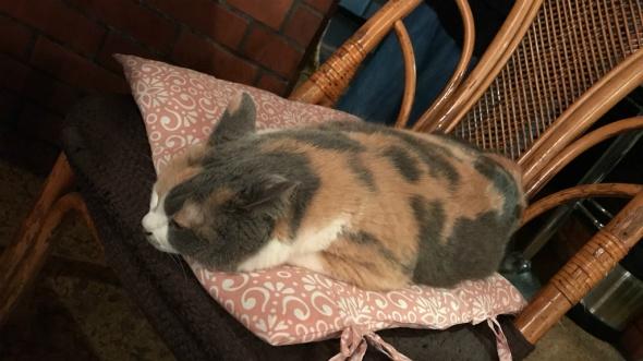 ツチノコっぽい三毛猫