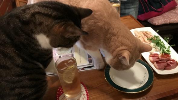 居酒屋に猫がいる
