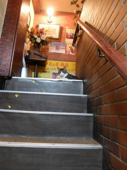赤茄子の階段上に猫